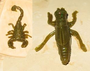 Name:  Grille Scorpion.jpg Hits: 386 Größe:  69,5 KB